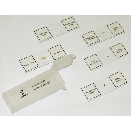 Set preparate microscop (5 buc. aripi de insecte)