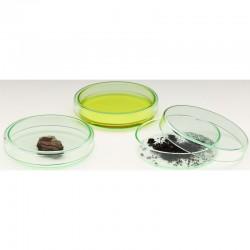 Vas Petri Windaus 120x20mm, sticlă cu capac de protecţie
