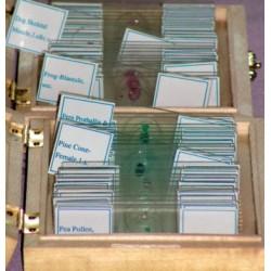Preparate pentru microscop (25 buc, vertebrate) (B)